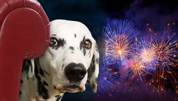 optimized-dog fireworks